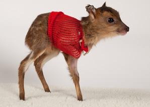 legacy_bandaged-deer