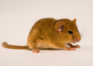 mouse_hazel