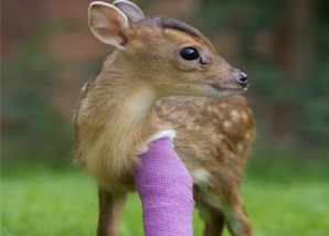 Virtual Gifts Deer Bandage