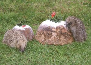 virtual-gifts-hedgehog
