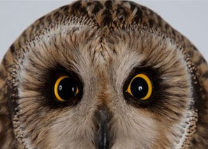 virtual-gifts-owl-treatment