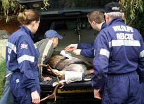Volunteer Rescuers