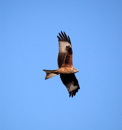 red-kite-homepage-who-we-are