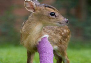 Virtual Gifts Deer Bandage